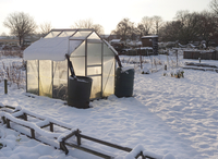 Snow covered urban allotment with greenhouse, Norwich, Norfo