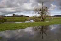 川の氾濫で水浸しになった牧草地