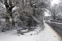 雪と氷に覆われた道と沼