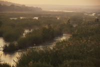 夜明けの川の風景