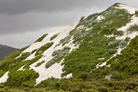 高地の砂丘 一部に草が生えている 32259009004| 写真素材・ストックフォト・画像・イラスト素材|アマナイメージズ
