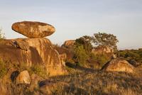 夜明けの光に照らされるサバンナの岩石