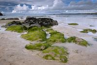 海岸の石と海藻