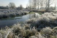 霜のおりた朝の川の風景