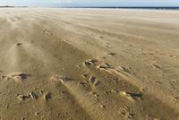 砂の海岸 ホルカム湾