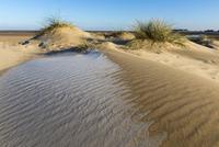 霜のおりた砂の海岸
