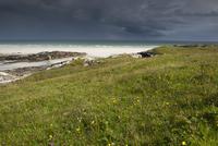 砂の海岸と草地 32259009118| 写真素材・ストックフォト・画像・イラスト素材|アマナイメージズ