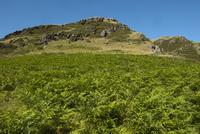 シダが密生する高地の風景