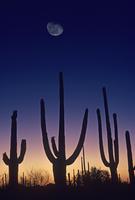沈む太陽と昇る月