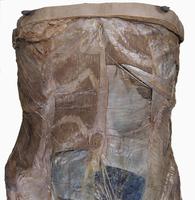 ヒト女性の前腹壁 筋肉 腹直筋鞘 32268000488| 写真素材・ストックフォト・画像・イラスト素材|アマナイメージズ
