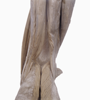 ヒトの左下腿部の解剖 背面から