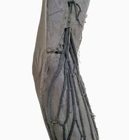 ヒトの左足の表面的な解剖