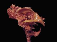 ヒトの脳の側面のレジンキャスト複製 くも膜下槽、脳室、脳脊髄液槽