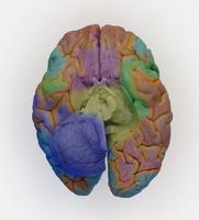 ヒトの脳底 32268000773| 写真素材・ストックフォト・画像・イラスト素材|アマナイメージズ
