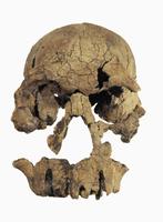 ホモ・ルドルフエンシス ケニアで発見 32268000780| 写真素材・ストックフォト・画像・イラスト素材|アマナイメージズ