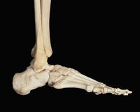 ヒトの足と足首の側面図