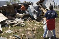 竜巻のあと探索する救助犬