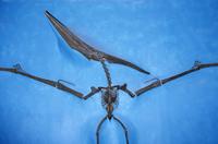 爬虫類の化石、白亜紀 32268001065| 写真素材・ストックフォト・画像・イラスト素材|アマナイメージズ