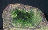 銅スクロドウスカ石 32268001231| 写真素材・ストックフォト・画像・イラスト素材|アマナイメージズ