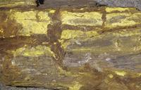 珪化木の中のカーノット石 ウランとバナジウムの鉱石
