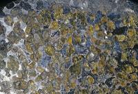 鉄-ニッケルのパラサイト隕石
