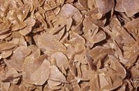 石膏の結晶 透明石こう(セレナイト)