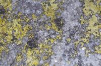 ウラノフェン ウランの放射性鉱石