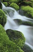 小渓流と苔の生えた岩