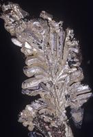 銀(Ag) 元素鉱物