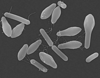ボツリヌス菌 32268001841| 写真素材・ストックフォト・画像・イラスト素材|アマナイメージズ