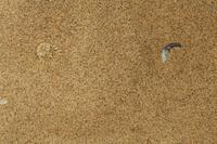 ナマクアヒメアダー