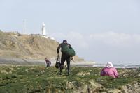 ワカメ漁をする漁師と御前埼灯台