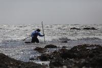 強風の中ワカメ漁をする漁師