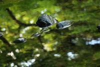 緑を映す川面