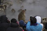 温泉に入るサルを見る観光客