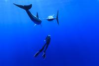 小笠原の海でドルフィンスイムする女性
