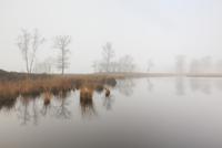 霧の湿地の風景 秋