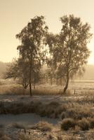 冬の夜明け 木のある風景