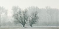冬の農場の風景
