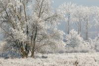 冬の霜の風景