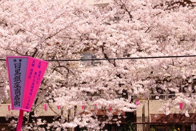 中目黒_桜