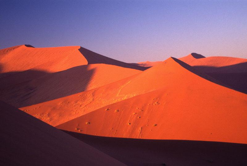 ナミブ砂漠の画像 p1_25