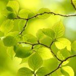自然派のあなたに!人気のオーガニックのファンデーションで素肌美人のサムネイル画像