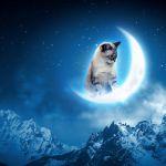告白される夢を見たら♪~夢占いで夢の意味を知りたい方へ~のサムネイル画像