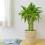 観葉植物を更に素敵にするには?鉢カバーを使ってみましょう!のサムネイル画像