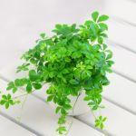 運気がアップする風水の活用術。観葉植物のおすすめな置き方のサムネイル画像