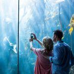 彼をときめかせる水族館デート!服装選びの注意点とおすすめコーデのサムネイル画像