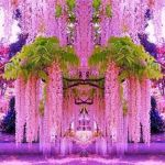 幻想的で思わず見とれる!お庭を素敵に彩る藤棚の作り方をご紹介のサムネイル画像