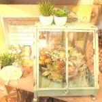 多肉植物を温室で。手間のかからない観葉植物なら多肉植物が一番♪のサムネイル画像