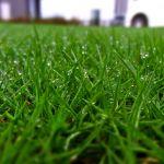 お隣の芝生はなぜ故青い!年中青い芝生とそうでない種類がある?のサムネイル画像